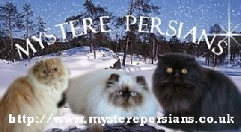 Mystere Persian cattery