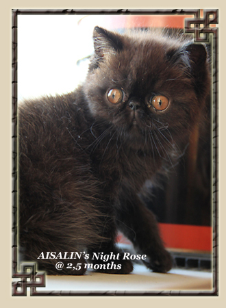 AISALIN's Night Rose